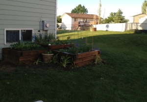 I love seeing the progress of the garden and anticipating the fresh veggies I'll soon be enjoying!