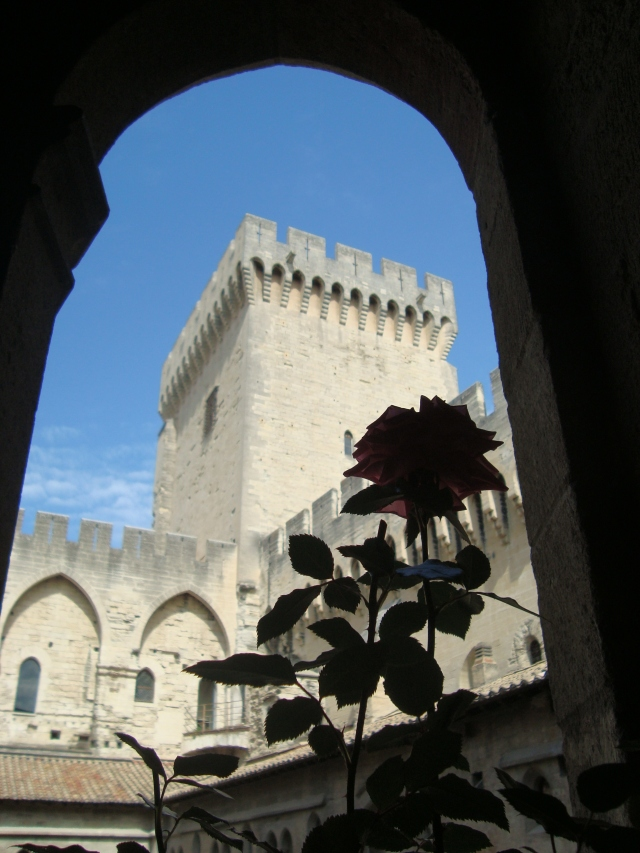 Beatutiful Rose at the Pope's Palace in Avignon France