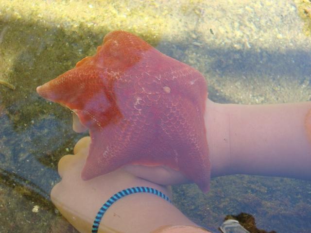 The starfish curled itself around Aurora's hand