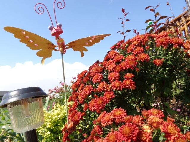 A bug's eye view of the mums in bloom and the butterfly garden decoration
