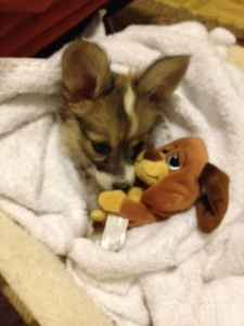 Romeo cuddled up with his puppy toy.  Such a sweetie!