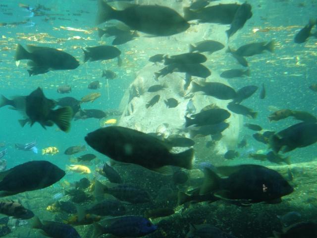 HippoUnderwaterTrek
