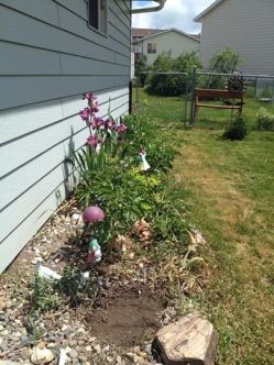 side flowerbed2014
