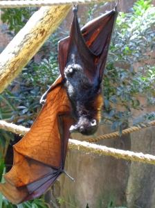 BatSunning